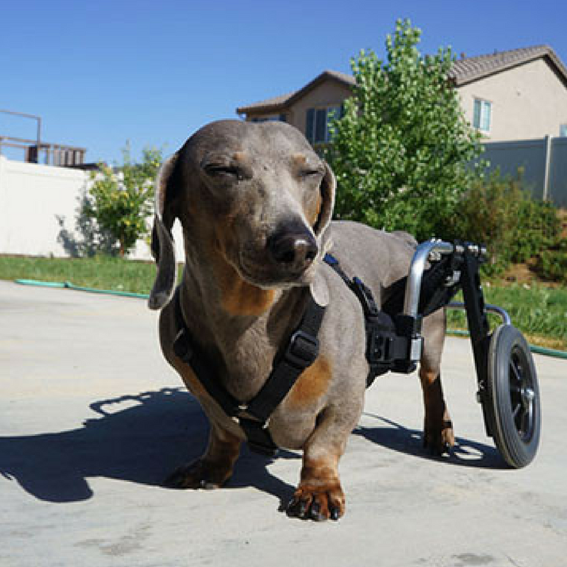 Wheelchair for dogs pets