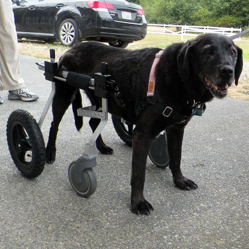 K9 Carts Front Support Kit